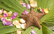 Other Floral Arrangements