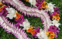 Flowers and leaves arranged in a pattern