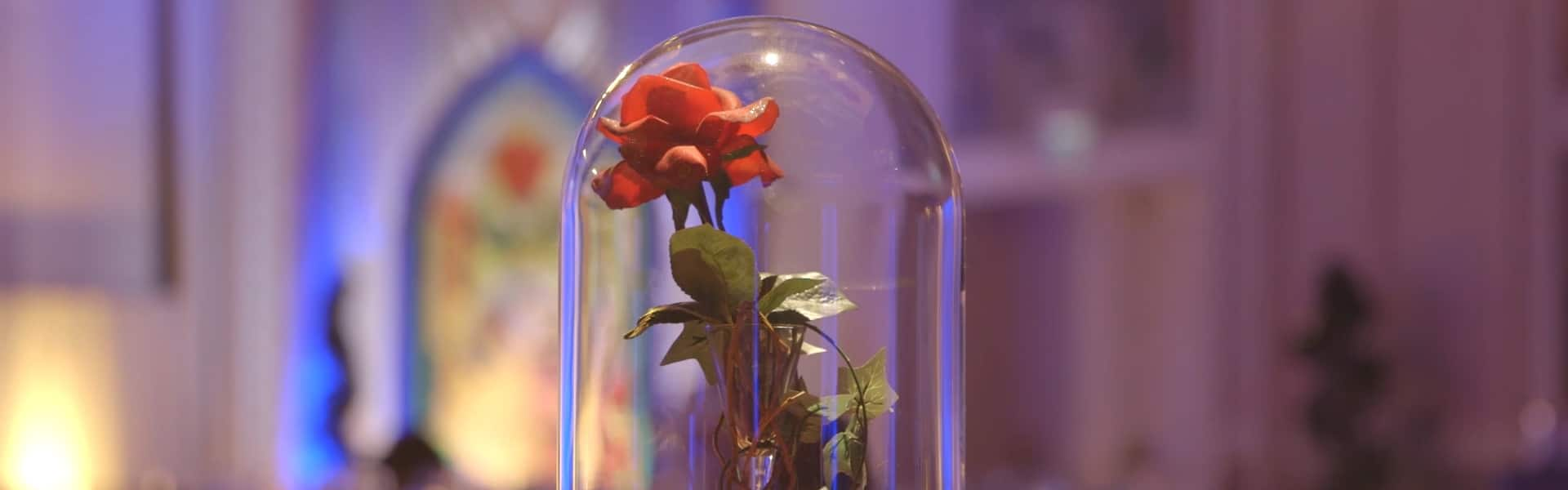 The Enchanted Rose in a bell shaped jar which appears in the movie Beauty and the Beast